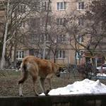 Депутаты не решили, где строить приют для бездомных животных