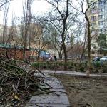 Во дворах проводится обрезка деревьев
