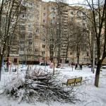 Обрезка деревьев вызывает возмущение у жителей дома Химиков 18