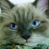 Аватар пользователя ЛирикаМира